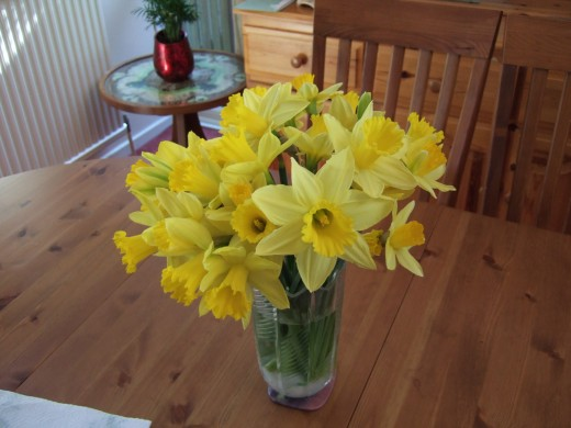 Daffodils in a glass vase!
