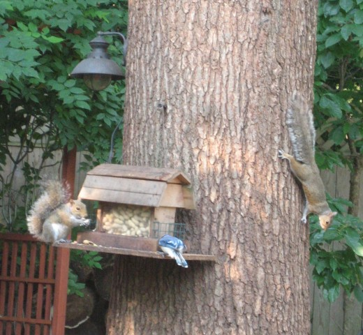Equal opportunity feeder.