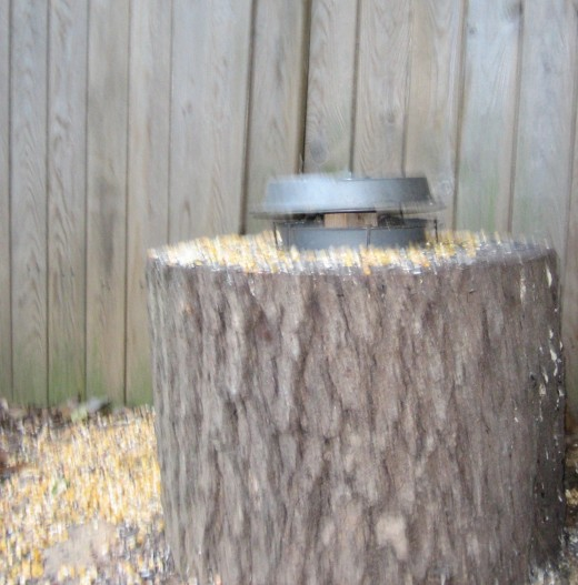 """Pan"" as a feeder - with cover to keep out the rain.  The two pans are separated by a block of wood with each pan nailed to the block."