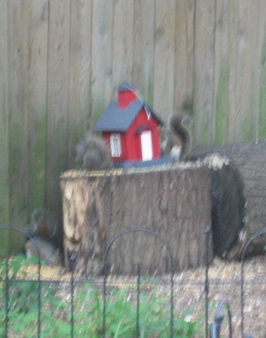 """Schoolhouse"" feeder screwed to log."