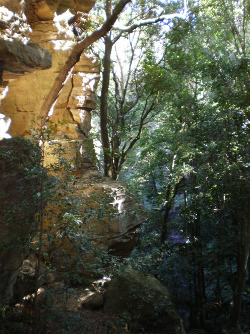 Blue Mountains National Park´s beautiful flora, NSW, Australia.