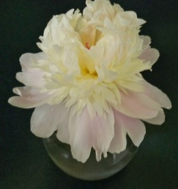 Can you guess where the peony goes?