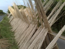 Jute fiber is used to make natural materials and green products
