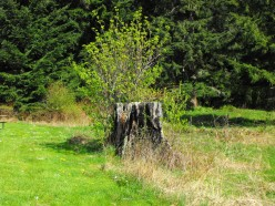 Stumps, Producing A Place to Rest