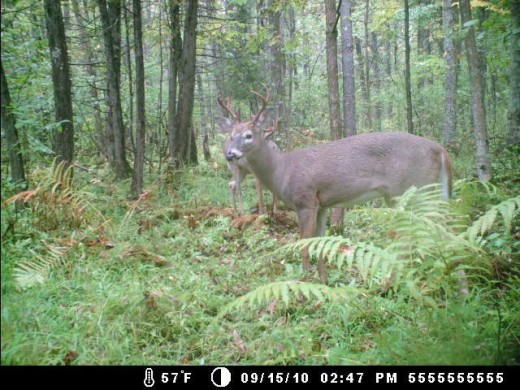 A picture from my cousins deer hunting cam on my uncles property where we hunt every thanksgiving(: