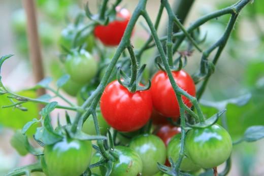 Home Vegetable Gardens