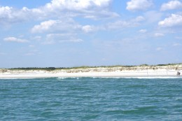 Huntington Beach State Park, as viewed from our dolphin cruise.