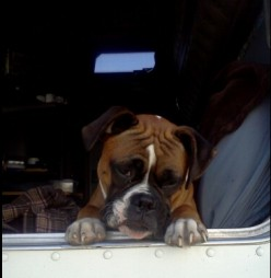 Does your pet ride well in the car or truck and do they get excited when they get to go for a ride?