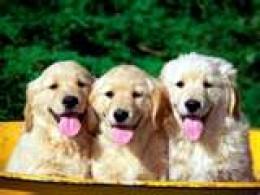 Adorable puppies look identical. Flicker