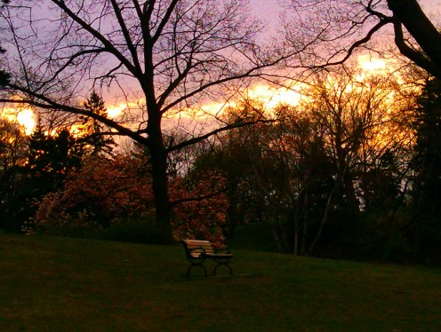 Early sunrise behind the trees in High Park, Toronto