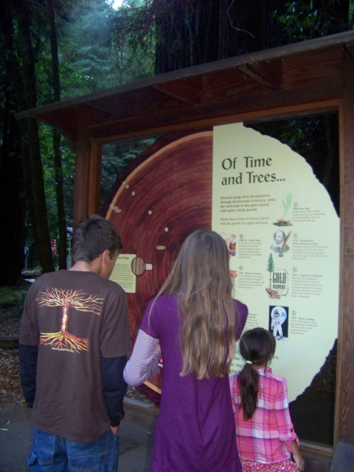 Reading Tree Rings in the Redwood Forest in California