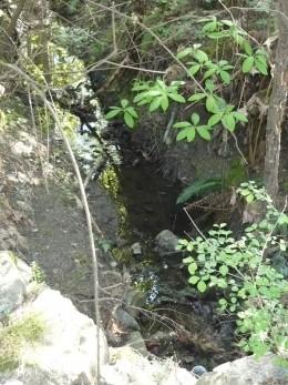A stream off Rolston Trail, Saanich, BC.