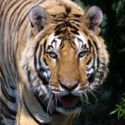 Bangladesh Page profile image