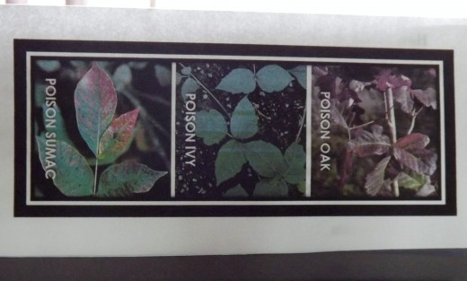 Photo of the three poisonous plants to use as a guide