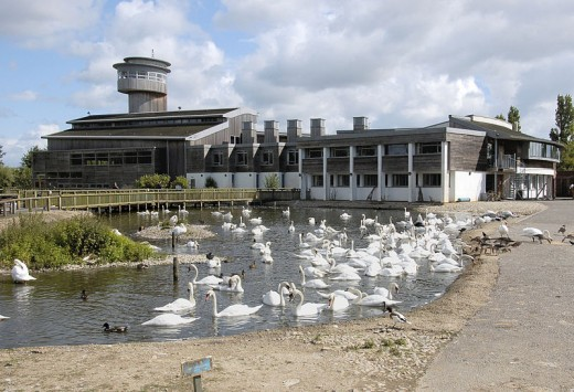 Slimbridge visitor centre in Summer. The huge tower is an observation deck, known as the Holden Tower.