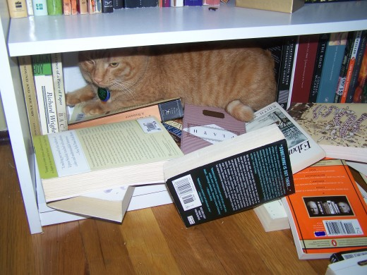 Henry hates books, but loves bookcases!