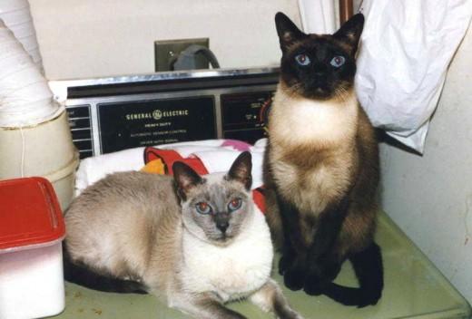 Tara (left) & Meing