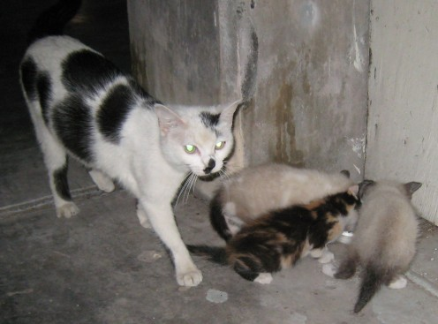 Mamacita - feral cat - closely guards her three little kittens