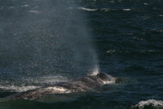 Whale Watching From Jet Boat - Budget Adventures