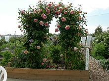 Example of an arched trellis (similar idea to the triangular trellis)