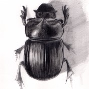 Insect Artist profile image