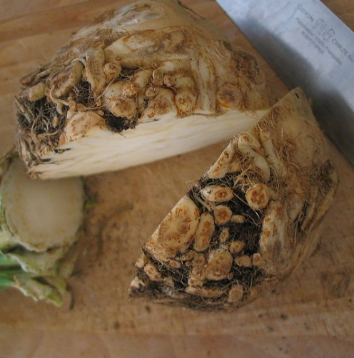 Sliced root of celeriac