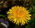Common Garden Weeds and How to Treat Them