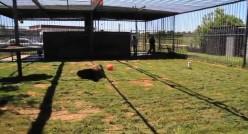 Tony's enclosure