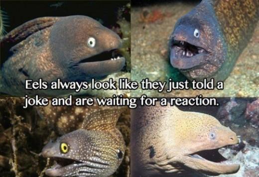 Eels Meme