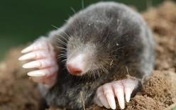 GCSE Chemistry Revision - Moles