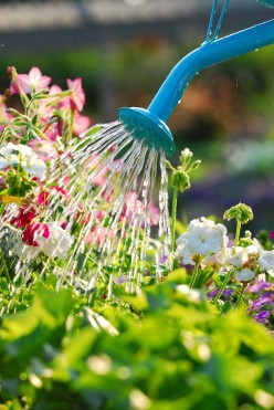 How Best to Water Soil