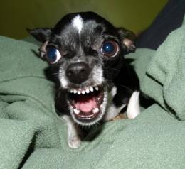 Top 10 Most Aggressive Dog Breeds