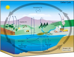 How carbon in diamonds is returned to nature and become part of natural Carbon Cycle?