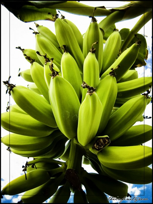 Bunch of Ripe Bananas