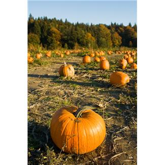 After carving your pumpkin, bake the seeds for a healthy and satisfying snack!