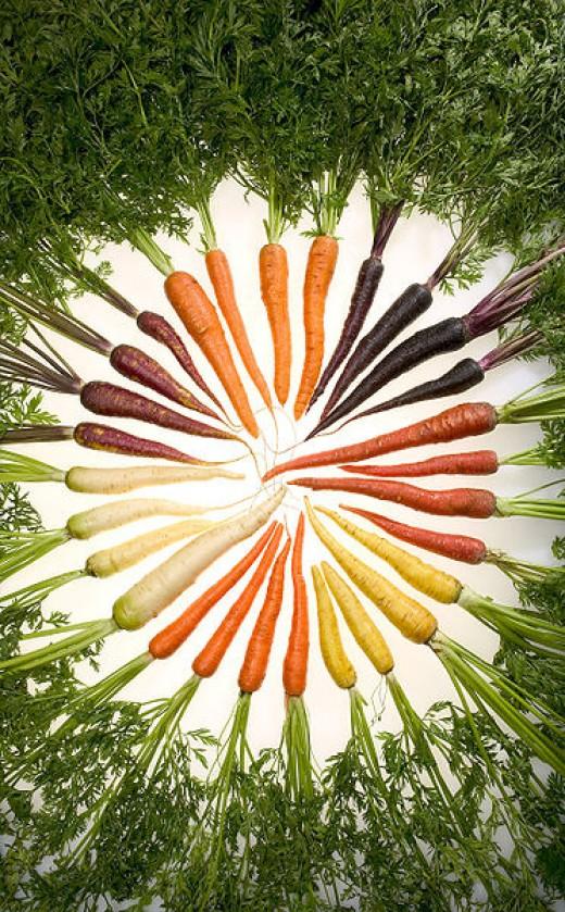Assorted varieties of carrots