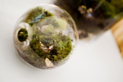 How to Grow Moss in a Terrarium