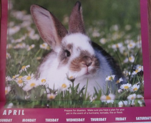 Bunny rabbit on April calendar page