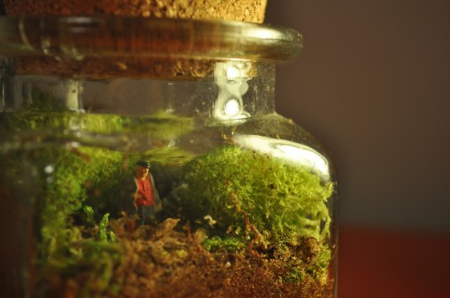 how to grow moss in a terrarium. Black Bedroom Furniture Sets. Home Design Ideas