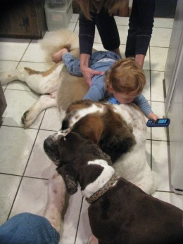 Everybody getting some lovin...St. Bernard is getting a face wash while he lets the baby play on his back.