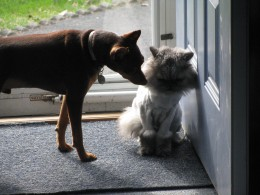 Just buddies checking each other out.