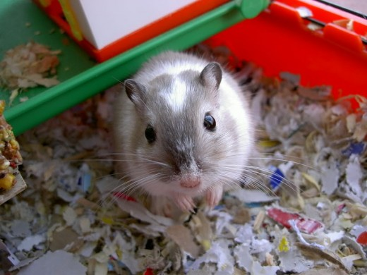 But did you know that many commonly kept small pets, such as this gerbil, are also considered to be exotic pets?