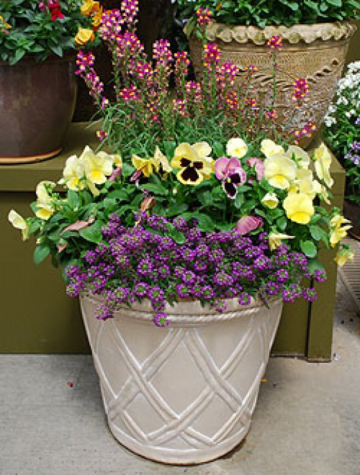 modern container garden ideas