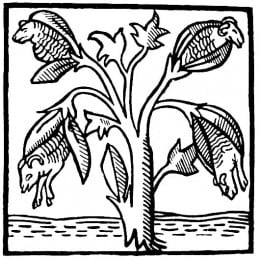 Cotton as imagined in the 14th century