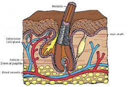 Increasing blood flow to the roots of your hair helps stimulate growth
