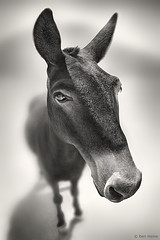 ACTING LIKE A DUMB ANIMAL, SAY THIS MULE, AND YOU WILL BE OUT OF A JOB SEEKING A BETTER JOB.