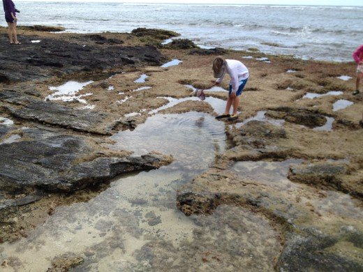 Exploring the reef for critters is safer at low tide.