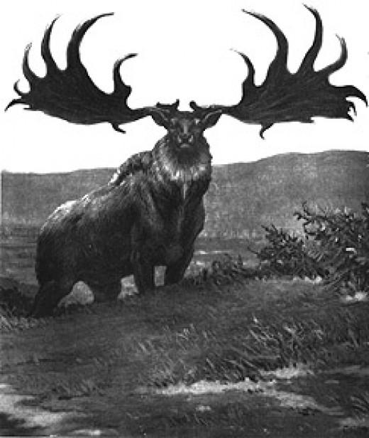 Irish Elk (Giant Deer)