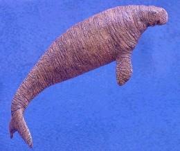 Stellar's Sea Cow
