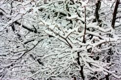 Winters Snow